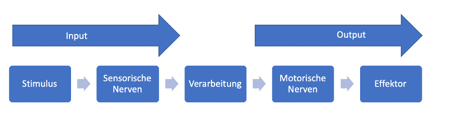 Abbildung NAT 1